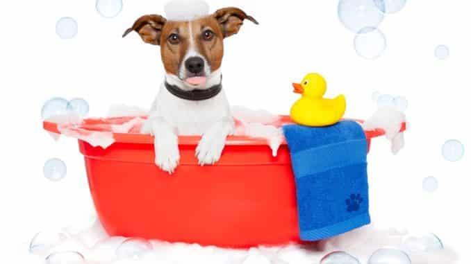 Der Kunststoff-Hundekorb: praktisch und bequem!