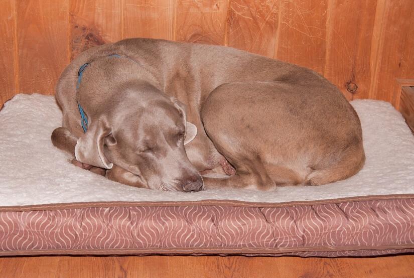 Die ortopädischen Hundekissen leisten einen wichtigen Beitrag zum gesunden Schlaf des Hundes.