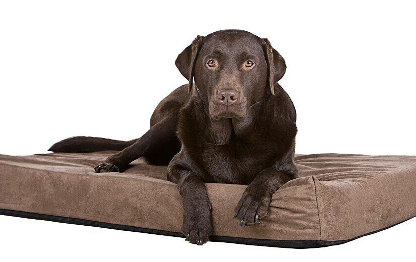 Orthopädisches Hundekissen
