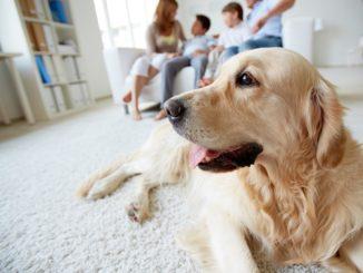 So kommt der Hund selbstständig ins Haus