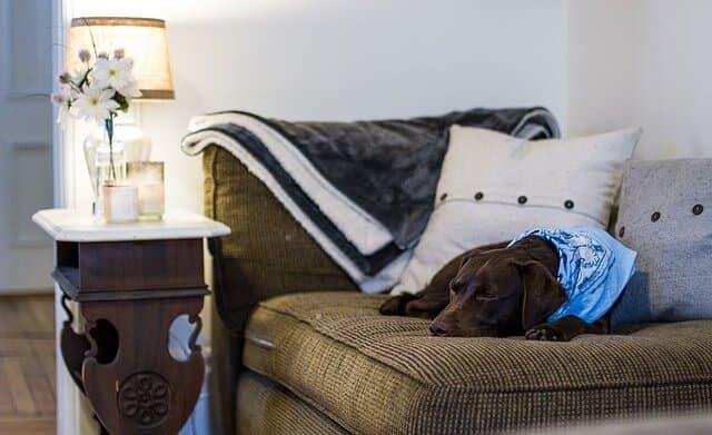 hundegeruch aus der wohnung entfernen diese tipps helfen modern. Black Bedroom Furniture Sets. Home Design Ideas