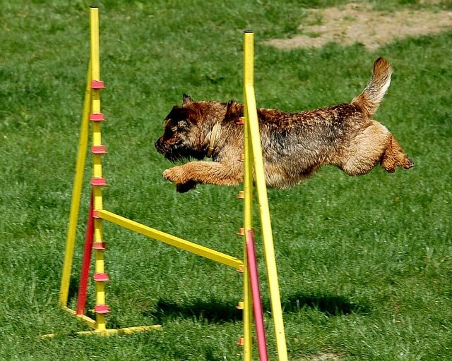 Agility - Hundesport mit Spaßfaktor