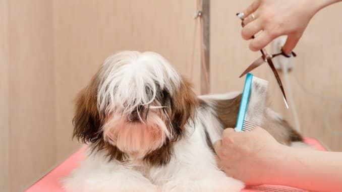 Die Hundeschere sollte so ausgewählt werden, dass diese zur Art des jeweiligen Hundefells passt.