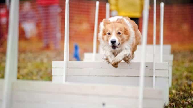 Agility für Hunde