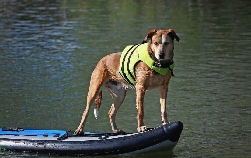 Hund mit Schwimmweste am Badesee