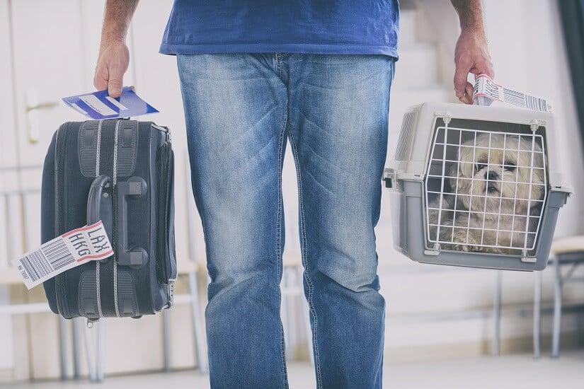 Hund in einem Hundebox aus Kunststoff kurz vor einem Flug