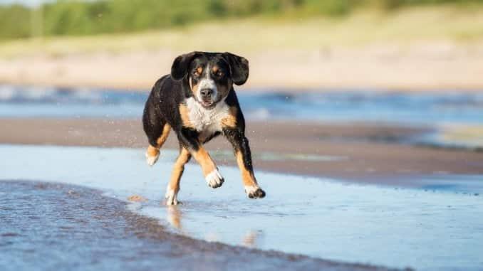 Mit dem Hund an den Badesee