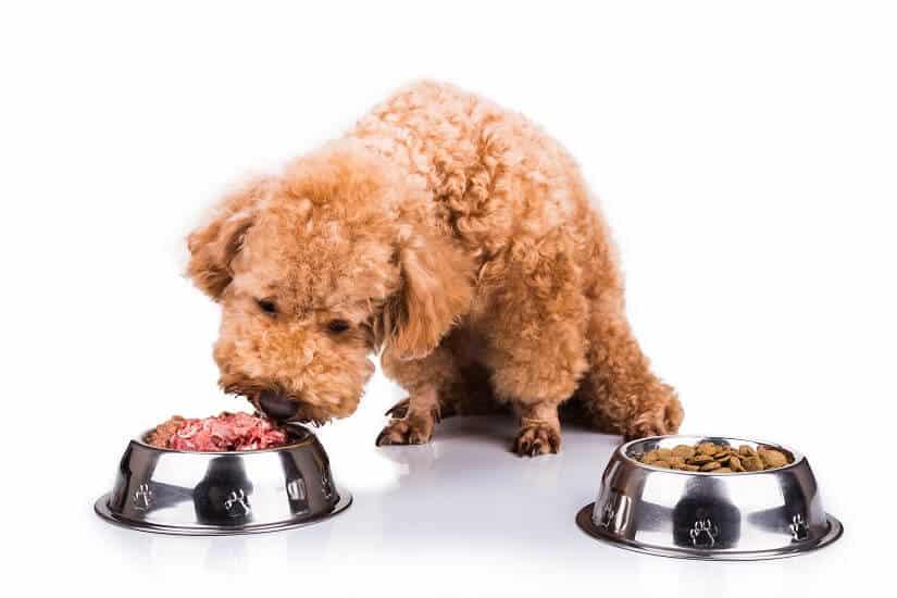 Vitamine für Hunde