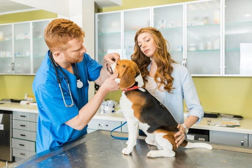 Zahnfleischentzuendung beim- Hund Untersuchung beim Tierarzt
