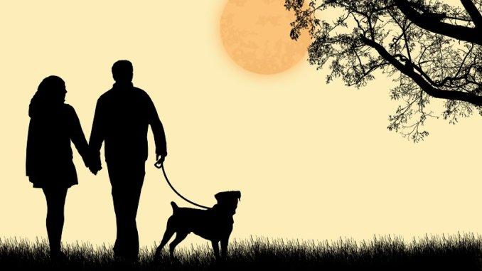 mit Hund im Dunkeln spazierengehen