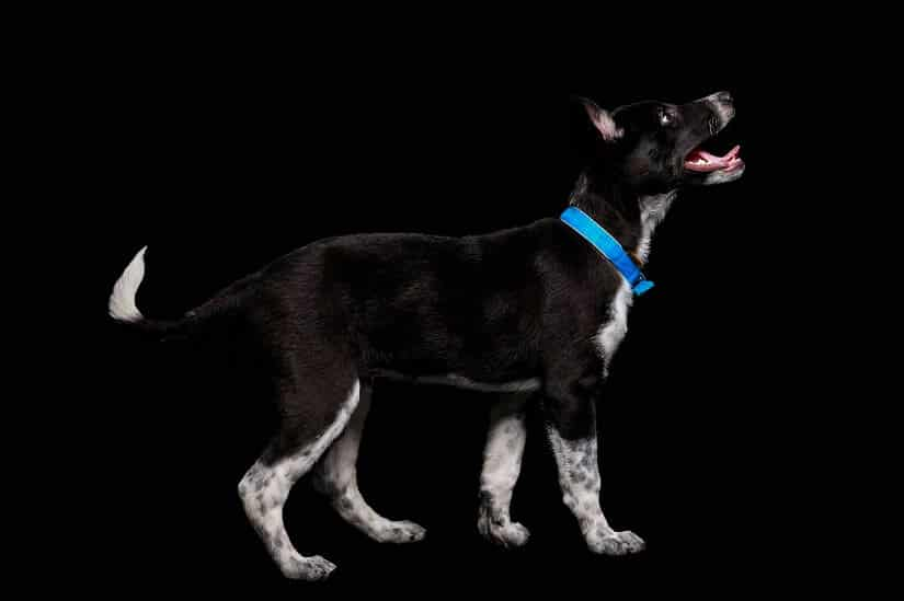 spazieren im Dunkel mit Hund