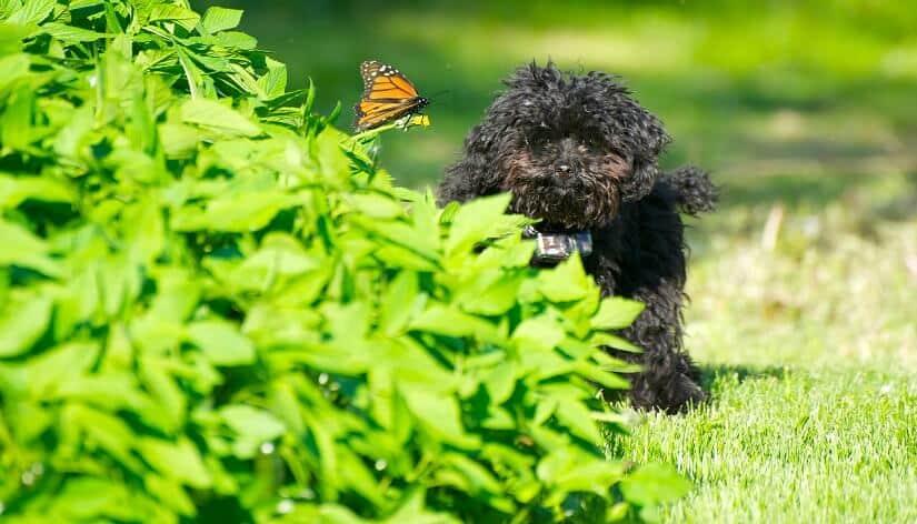 unsichtbarer-Hundezaun-GPS