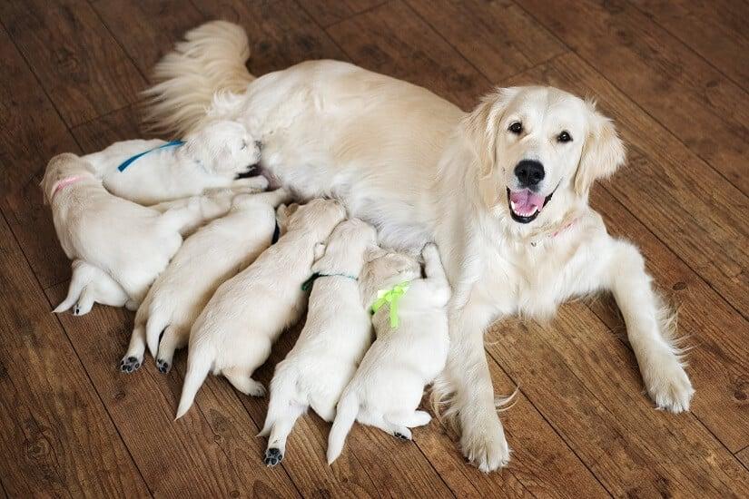 Je nach Lebensphase wird der Bedarf an wasserlöslichen Vitaminen beim Hund unterschiedlich sein
