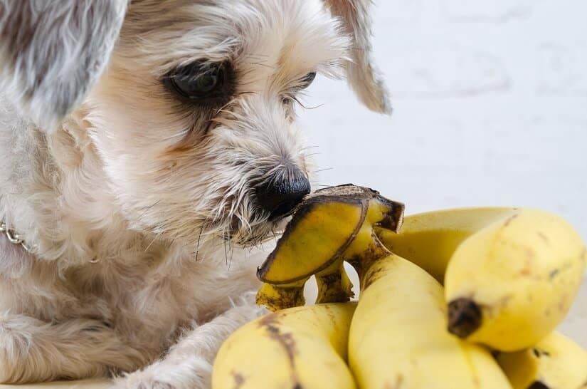 wasserlösliche Vitamine Hund