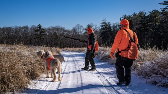 Hunde bei der Jagd mit einer Hundeschutzweste
