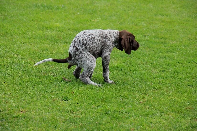 Hundeabwehr mit Ultraschall gegen die Hinterlassenschaften von Hunden im eigenen Garten.