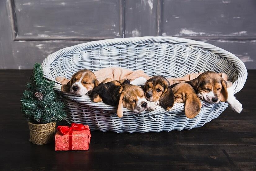 Hundekoerbchen-Weide