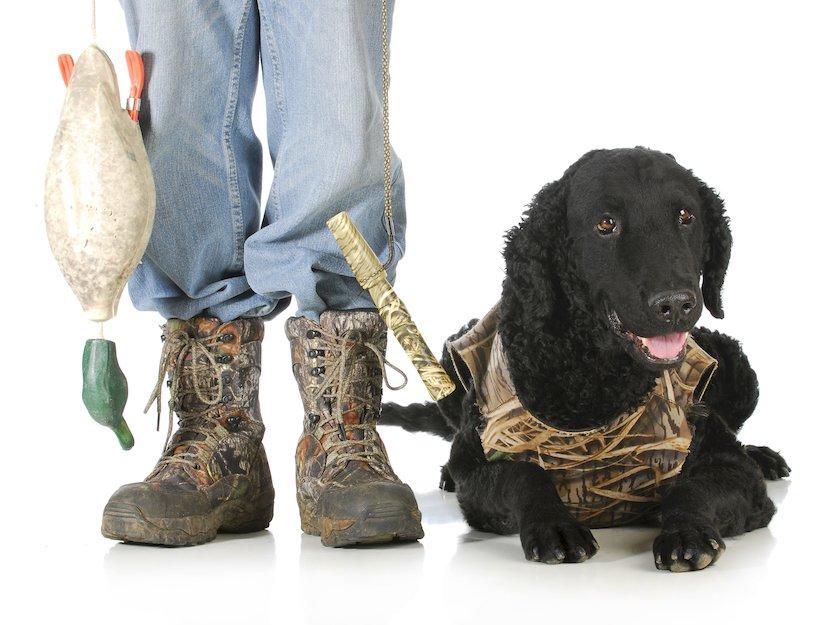 Jagdhund mit einer Hundeschutzweste