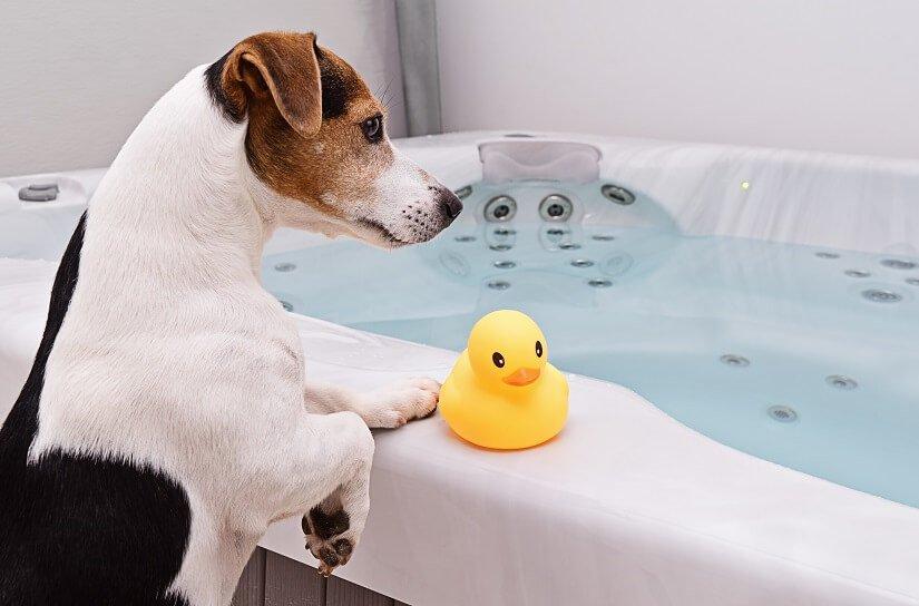 Der Jack Russell Terrier schwimmt gern. | Foto: Kira_Yan / Bigstockphoto.com