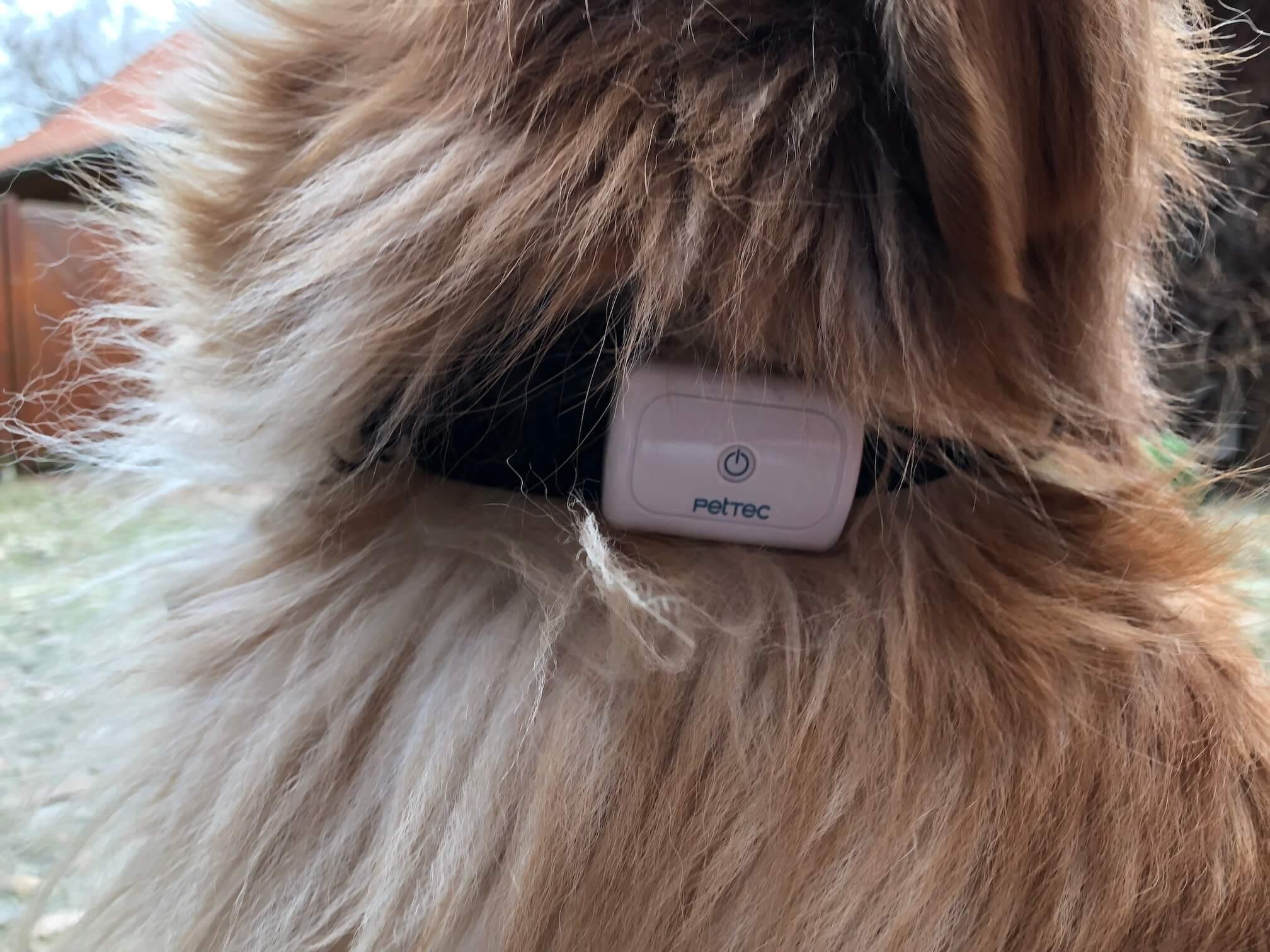 Holly trägt den PetTec GPS Tracker