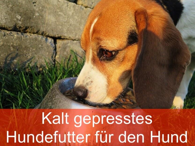 Kaltgepresstes Hundefutter ist besser für den Hund
