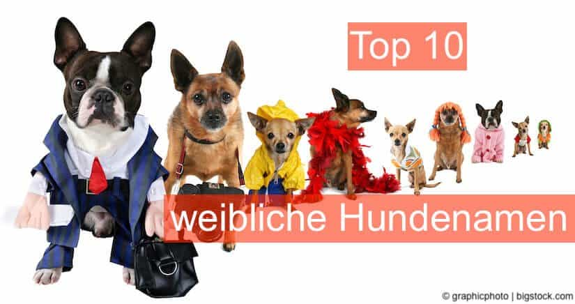 Hundenamen Top 10