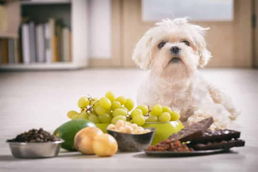 Was darf ein Hund fressen und was nicht?