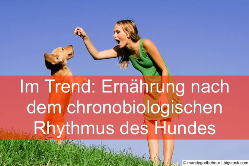 Ernährung nach dem chronobiologischen Rhythmus des Hundes