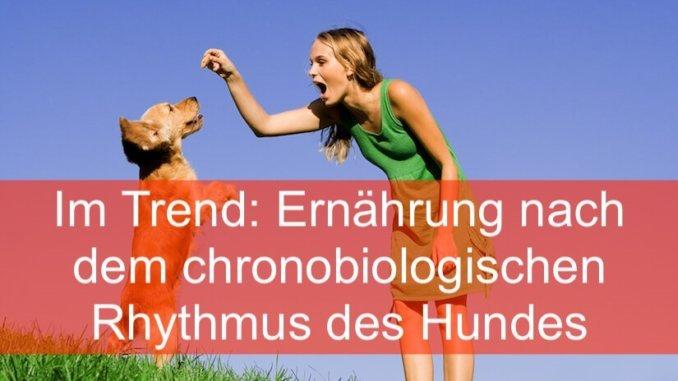 Ernaehrung nach dem chronobiologischen Rhythmus des Hundes