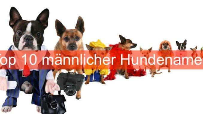 maennliche Hundenamen