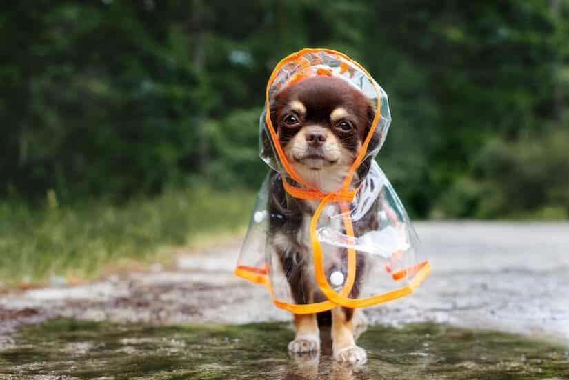 Durchsichtiger Hunderegenmantel
