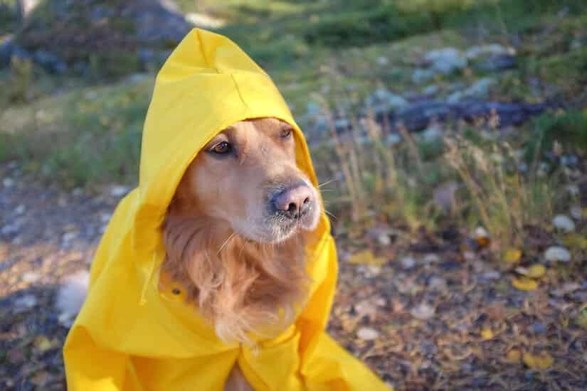 Hunderegenmantel mit Kapuze