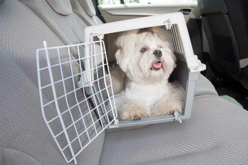 Malteser in einer Hundetransportbox auf der Rückbank im Auto