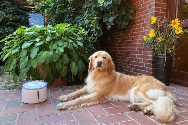 PetTec Pet Fountain Trinkbrunnen für Hunde im Praxistest_0576