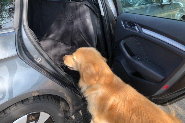Floxik Autoschondecke für Hunde mit Seitenschutz für den Rücksitz_0615