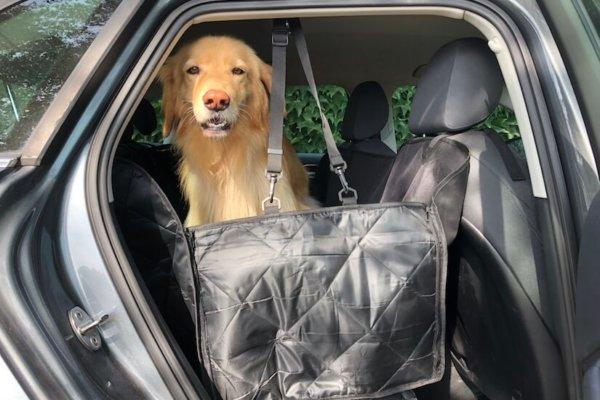 Floxik Autoschondecke für Hunde mit Seitenschutz für den Rücksitz_0624
