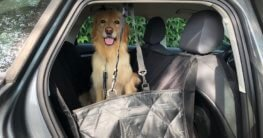 Autoschondecke für die Rückbank