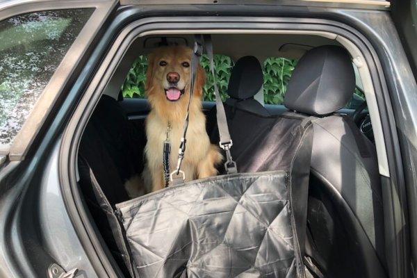 Floxik Autoschondecke für Hunde mit Seitenschutz für den Rücksitz_0630