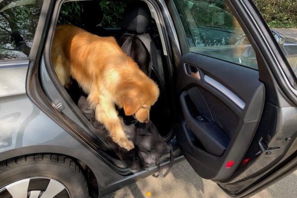 Floxik Autoschondecke für Hunde mit Seitenschutz für den Rücksitz_0640
