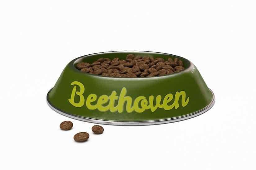 Ausgefallener Hundename Beethoven