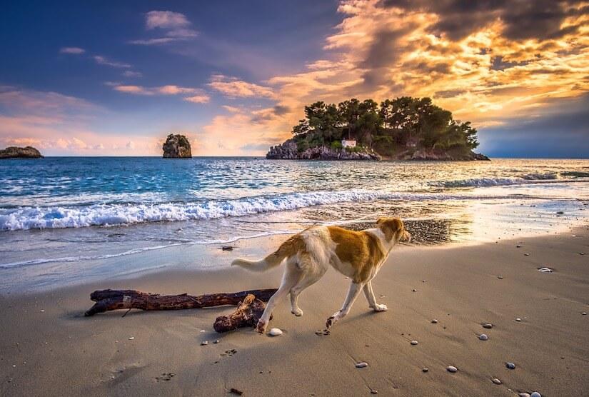 Hund bei Hitze am Strand