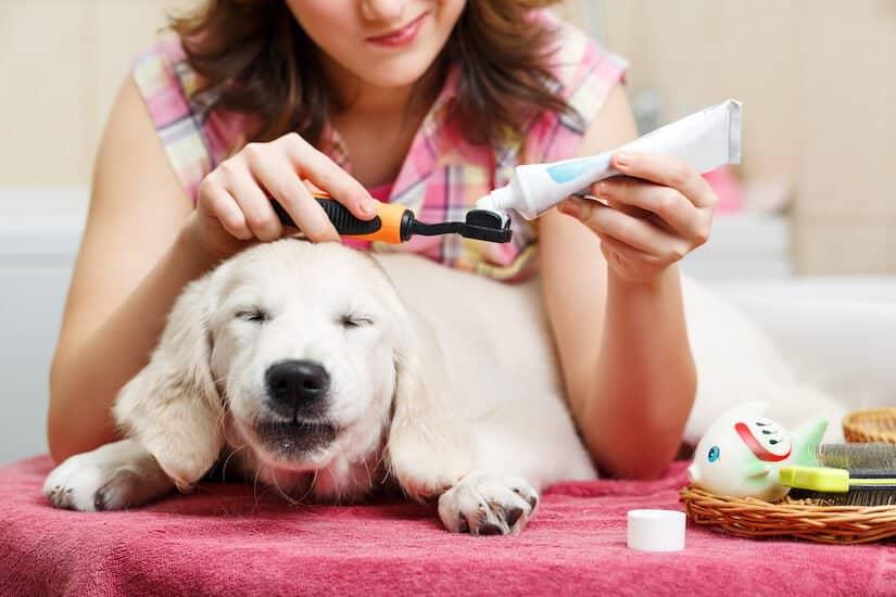 Hund bekommt die Zähne mit Zahnpaste für Hunde geputzt