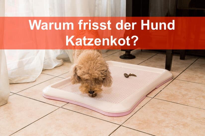 Hund Frisst Katzenkot Grunde Und Losungen Modern Dogs De