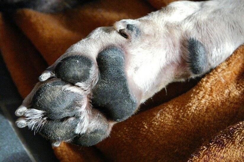 Hundeballen im Winter schützen und pflegen