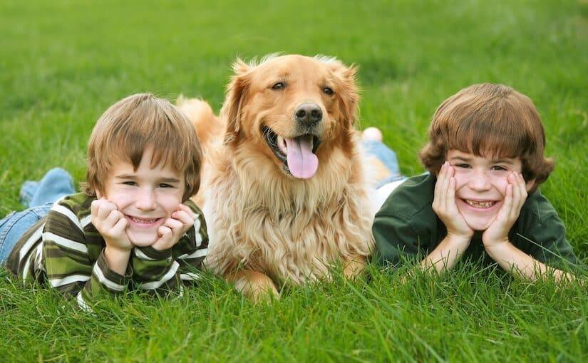 Hunde Kinder
