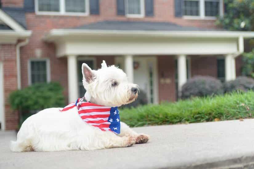 Kleiner Hund mit einem Hundehalstuch