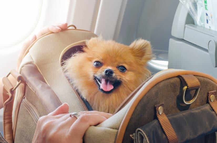 Reisen mit Hund im Koffer