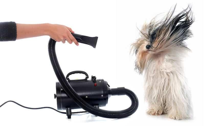 Haartrockner für Hunde Hundefön