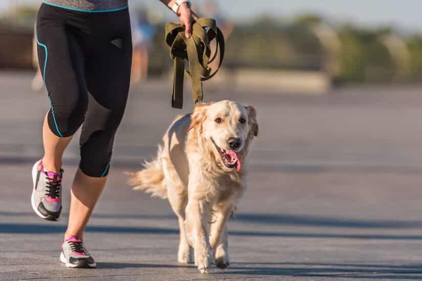 Keine geeignete Joggingleine für den Hund