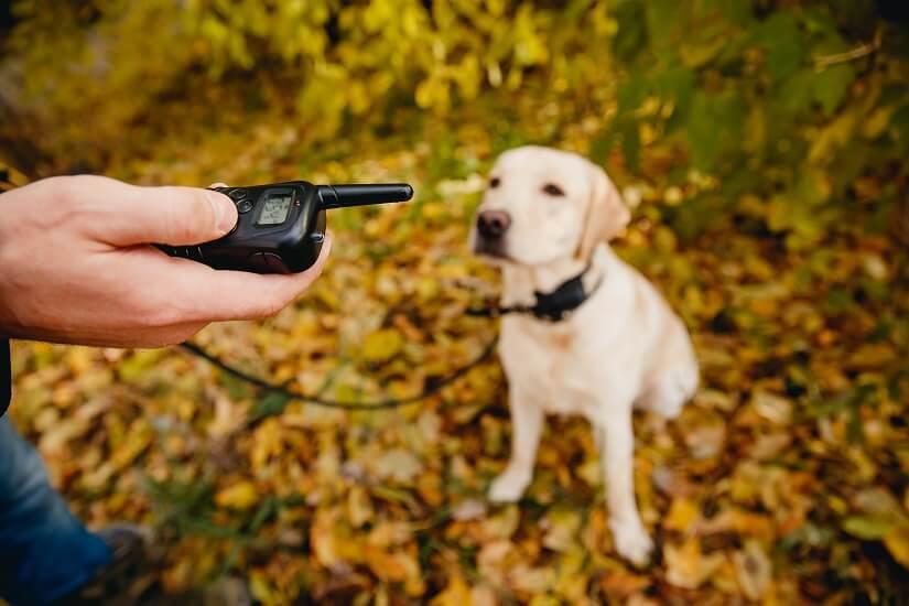 Hund mit Erziehungshalsband